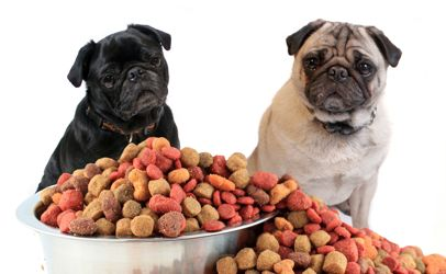 5 Things We Should Know About Pet Foods