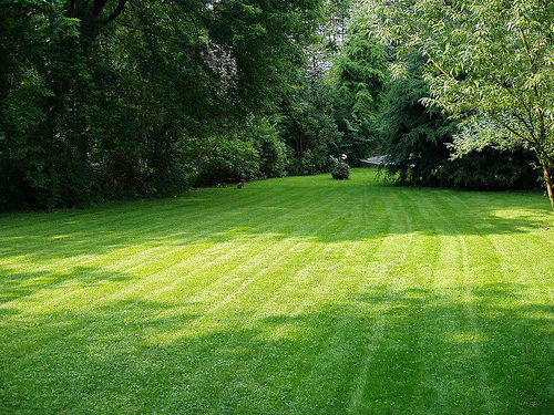 Keeping Our Lawn Ready for Summer