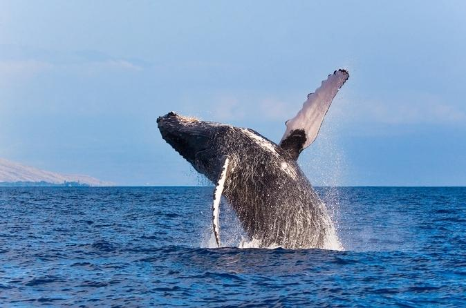 4 Of The Best Places In The World To Go Whale Watching