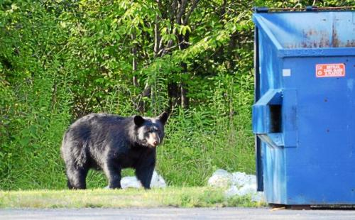 What You Should NOT Do If You Encounter A Bear On The Road