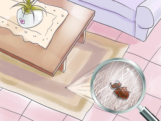 Tips On How To Get Rid Of Carpet Beetles