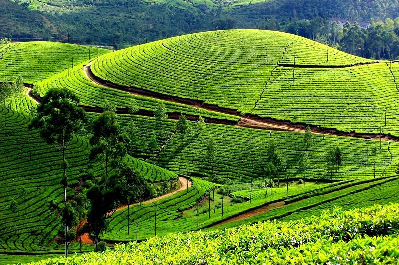 The Enchanting Landscapes Of Munnar