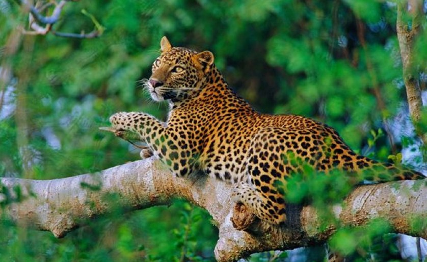5 Best Wildlife Viewing Experiences Around The World