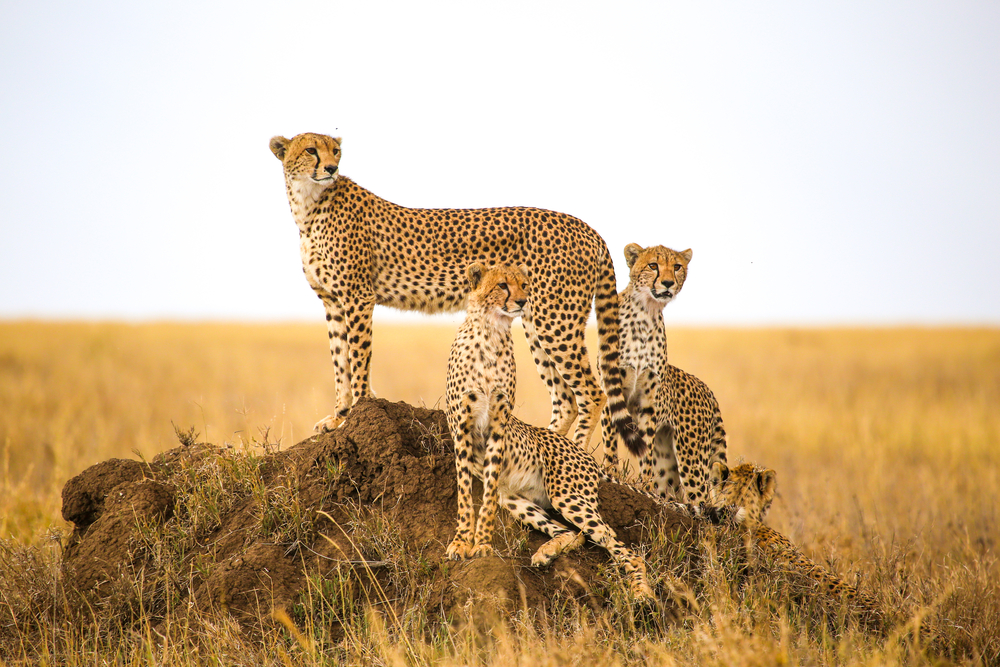 Top 4 Animal Conservancies In The World: Must-Go Destinations For Animal Lovers