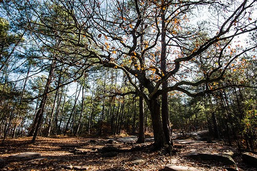 5 Outdoor Activities to Enjoy While in Norcross